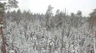 Puszcza Białowieska zimą z lotu ptaka