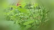 Las z perspektywy owadów