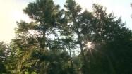 Słońce świecące zza drzew