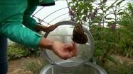 Motyl na dłoni