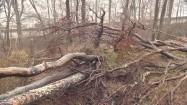 Drzewa połamane przez orkan
