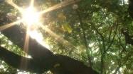 Słońce przebijające się przez koronę drzewa