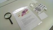 Daktyloskopia - pomoce dydaktyczne