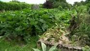 Kaktusy i cukinie w ogródku