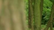 Człowiek idący lasem