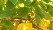 Żółte i zielone liście