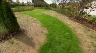 Chwasty w ogrodzie