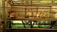 Karmienie leniwców