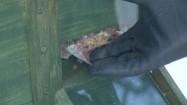 Karma dla ptaków w kaczkomacie