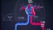 Praca serca - animacja