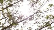 Słońce przebijające się przez gałęzie drzewa