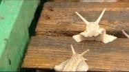 Skrzynka ślimaków hodowlanych