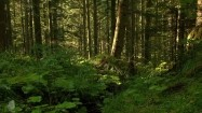 Roślinność w lesie