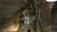 Kot arabski w zoo