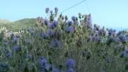 Roślinność na wyspie Zakintos w Grecji