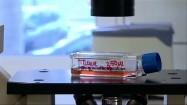 Pojemnik do przechowywania komórek macierzystych