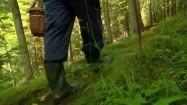 Grzybiarz w lesie