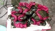 Kraby przygotowane do grillowania