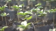 Sadzonki roślin