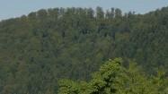 Drzewa porastające wzgórze