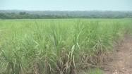 Zielona łąka i palmy