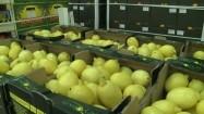 Cytryny w hurtowni