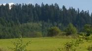 Łąka, krzewy i drzewa