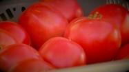 Czerwone pomidory w plastikowej skrzynce
