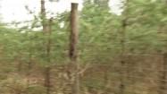 Drzewa ogrodzone siatką
