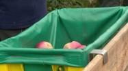 Zbieranie jabłek do plastikowej skrzyni