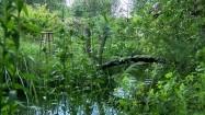 Drewniany mostek wśród zieleni