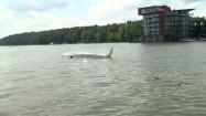 Wywrócona żaglówka na jeziorze