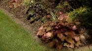 Rabata w ogrodzie