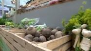 Warzywa w drewnianych skrzynkach