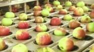 Wydrążanie gniazd nasiennych w jabłkach