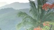 Liście palmy powiewające na wietrze