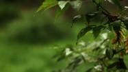 Rośliny w ogrodzie po deszczu