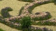 Parter kwiatowy - ornament