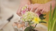 Zrywanie kwiatów hortensji