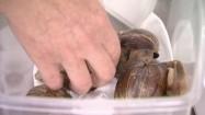 Ślimaki w plastikowym pojemniku
