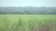 Źdźbła trawy kołyszące się na wietrze