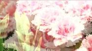 Różowe tulipany strzępiaste