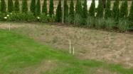 Ogród - trawa i chwasty