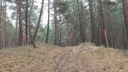 Pagórek w lesie