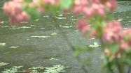 Roślinność Kostaryki i opady deszczu