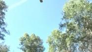 Samolot gaśniczy nad lasem