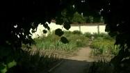 Roślinny łuk