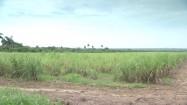 Zielona łąka na Kubie