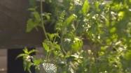 Zioła w ogródku