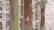 Drzewa w lesie zimą